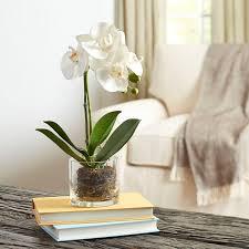 faux orchids birch faux orchid in glass vase reviews wayfair