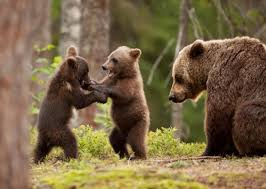 Are Bears Color Blind 14 Furry Facts About Bears Mental Floss