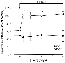 the effect of insulin on expression level of nucleoside