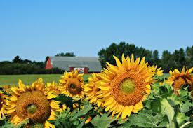 Flowers In Bismarck Nd - crops travel north dakota