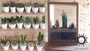 where to buy succulents in the philippines 18 shops you should