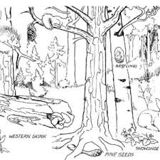 Forest Coloring Pages With Animals Coloring Pages Detailed 793 Forest Animals Coloring Pages
