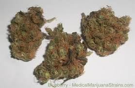 basement smell medical marijuana strains