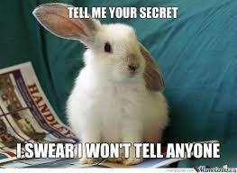 Secret Meme - rabbit ramblings bunny monday meme day secret