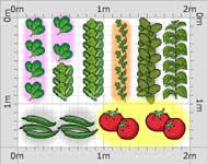 organic vegetable plants garden ready vegetable plants the