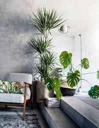 grünpflanzen im schlafzimmer die besten 25 wohnzimmer pflanzen ideen auf