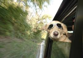 Window Seats For Dogs - traveling with dog safety tips and recommendations