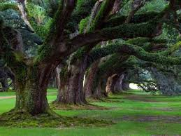 slideshows slideshow awesome trees