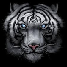 black work shirt custom design majestic white tiger
