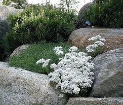 On The Rocks Garden Grove Rocks In Garden Rocks In Garden On The Rocks Garden Grove Menu