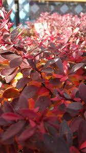 Garden Soil Types 21 Best Shrubs Images On Pinterest Shrub Shrubs And Beautiful