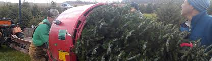 wholesale christmas peterson s riverview nursery llc wholesale christmas trees
