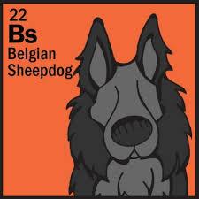 belgian sheepdog herding 59 best herding group images on pinterest dog breeds dog table