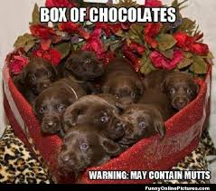 Chocolate Lab Meme - bouquet of cute puppies