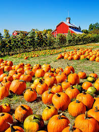 Local Pumpkin Patches The Great Pumpkin Patch Everything Fall Pinterest Patches