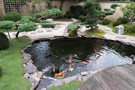 personable small garden with pond and beautiful fish u2013 radioritas com