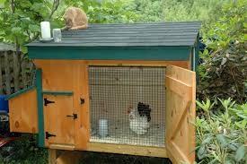 file bantams in chicken coop jpg wikimedia commons