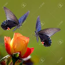 Nice Flower Picture - butterfly on nice flower for adv or other purpose use stock photo