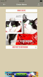 Meme Generator Cat - funny cat make memes meme generator with funny cats create your
