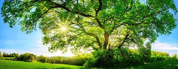 royalty free sun through trees pictures images and stock photos