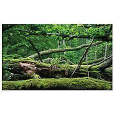 Vivarium Wood Decor Reptile Décor Terrarium Branches Rocks U0026 Caves Petsmart