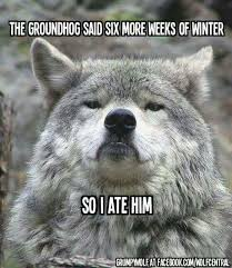 Crazy Wolf Meme - 1472 best gee whiz file images on pinterest funny stuff hilarious