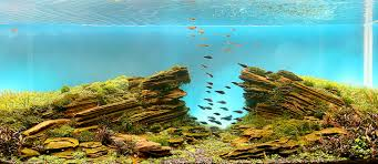 Aquascape Fish Mind Blowing Aquariums Look Like Underwater Forests Deserts And