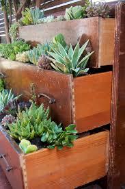 succulent garden ideas garden design ideas