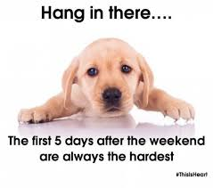 Hang In There Meme - hang in there dog