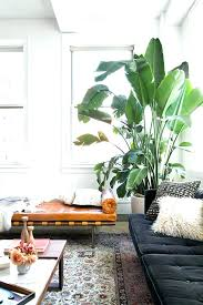 low light indoor trees large indoor plants and trees tall house plants tall indoor tree
