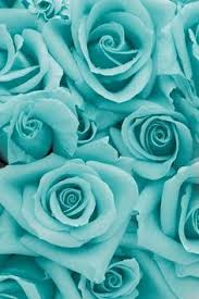 turquoise flowers roses in pastel colors so soft and beautiful flourish it