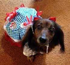 Dorothy Toto Halloween Costume Wizard Oz Dorothy Dog Halloween Costume Shipping