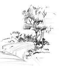 trees plants vegetation