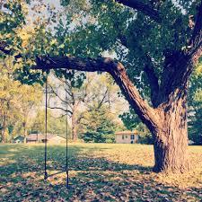 triyae com u003d perfect backyard tree various design inspiration