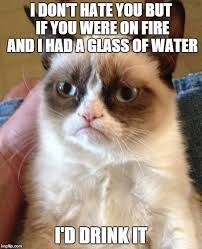 Cat Meme Funny - 35 funny grumpy cat memes funny grumpy cat memes grumpy cat and memes