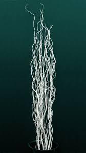 curly willow branches curly willow branches
