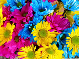 yellow daisy wallpapers photo collection colorful daisy wallpaper