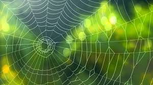 halloween spider background spider background video animated web backgrounds youtube