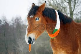 horse celebrates st patrick u0027s day stock photo picture and