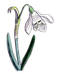 spring border clipart free download clip art free clip art