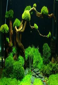 Aquascape Design 101 Aquascape Design Android Apps On Google Play
