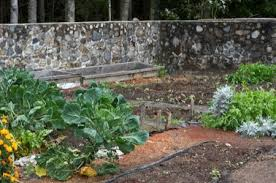 lucindaville walled kitchen gardens