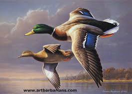 1000 ideas about duck hunting on hunting
