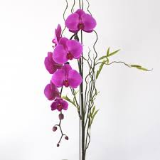 Orchid Delivery Los Angeles Florist Flower Delivery By La Orchidia