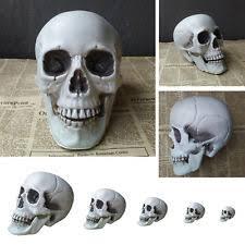 Skull Decorations For The Home Plastic Skull Ebay