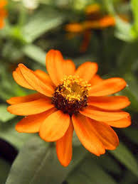 easy flowers to grow indoors 12 best growing flowers from seed images on pinterest backyard