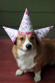 Corgi Birthday Meme - best 25 happy birthday corgi ideas on pinterest birthday corgi