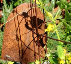 Vertical Garden Trellis - vertical gardening with concrete wire mesh grow and resist