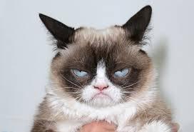 Grumpy Cat No Meme - the world s grumpiest cat 40 funniest grumpy cat memes pics