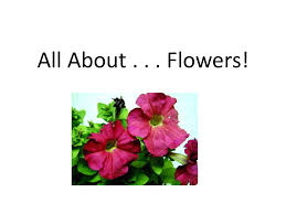 All About Flowers - ornamental horticulture unit seeds to flowers ppt video online